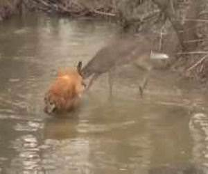 deer excited by dog Funny Video