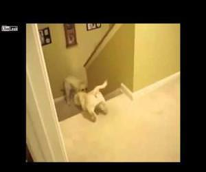 difference between cats and dogs Funny Video