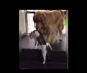dog breaks up cat fight Funny Video