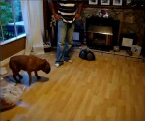 Dog Chasing Shadow Funny Video