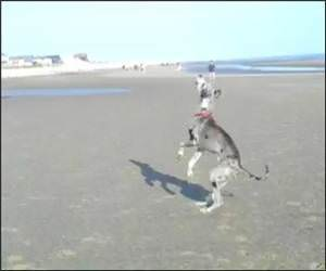 Funny Dog Vs Kite Video
