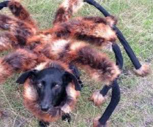dog dressed like spider prank Funny Video