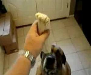 dog eating a bean burrito Funny Video