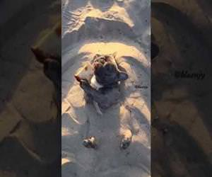 dog enjoying some time in the sand Funny Video