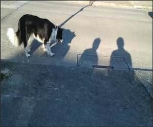 Dog Hates Shadows Funny Video