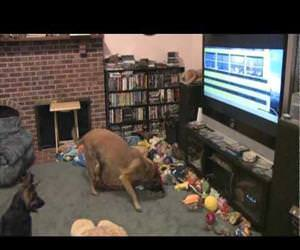 dog is excited to watch disney bolt Funny Video