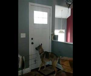 dog jumping for joy when his owner gets home Funny Video