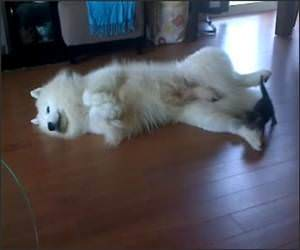 Dog and Kitten Playtime Funny Video