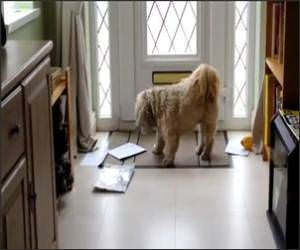 Dog Loves Mail Time Video