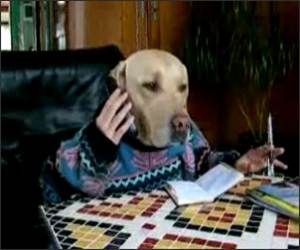 Dog making phone call Funny Video