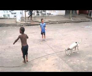 dog playing jump rope Funny Video
