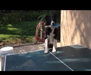 dog playing ping pong Funny Video