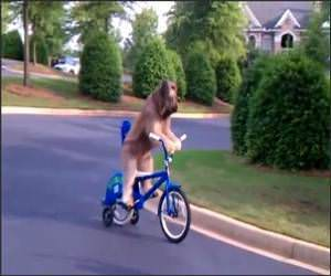 Dog Riding a Bike Video