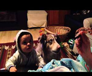 dog says mama before baby Funny Video
