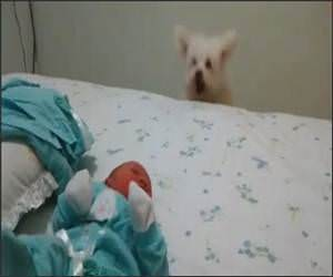 Funny Dog Sees Baby Video