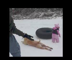 dog sledding Funny Video