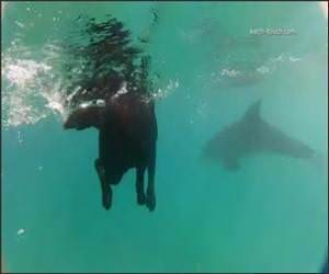 Dog swimming with the Dolphins Video