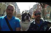 dog tryin to speak different languages Funny Video