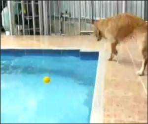 Dog Versus Pool Funny Video