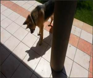 Dog Vs Shadow Funny Video
