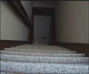 Little Dog Vs Stairs Video