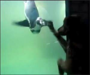 Dog Vs Penguin Funny Video