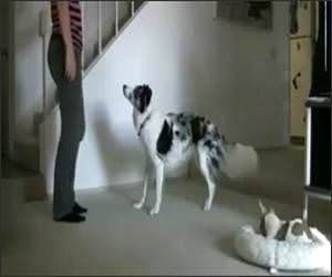 Dog Workout Buddy Funny Video