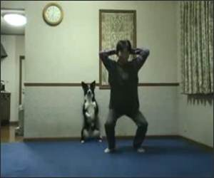 Dog Doing Squats Funny Video