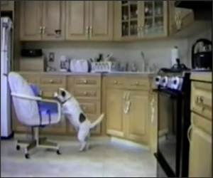 Dog Uses chair to get treat
