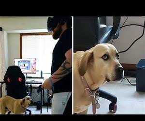 doggo is confused by VR game Funny Video