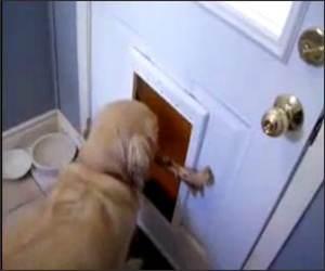 Doggy Door Stick  Funny Video