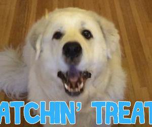Dogs Catching Treats Funny Video