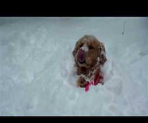 dogs excited for the snow Funny Video