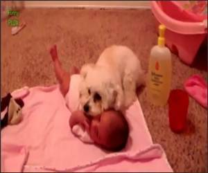 Dogs protecting babies Funny Video