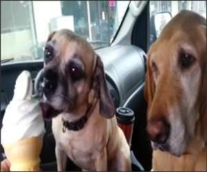 Dogs Sharing Ice Cream Video
