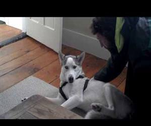 dramatic dog and his kennel Funny Video