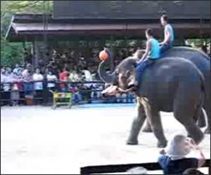 Elephant Basketball