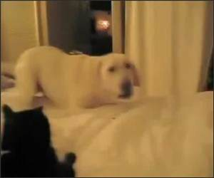 Excited Crazy Dog Funny Video