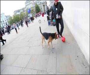 Freestyle Soccer , Versus dog Funny Video