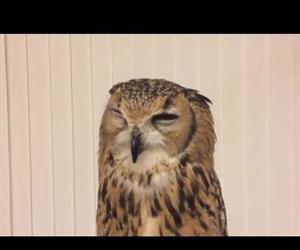 funny owl sneezes Funny Video