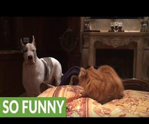 get off my spot cat Funny Video