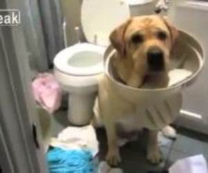 Guilty Dogs Compilation Funny Video