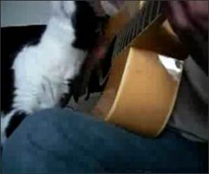 Guitar Cat Funny Video