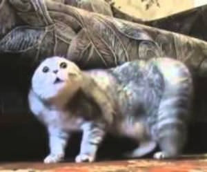 heavy metal cats Funny Video