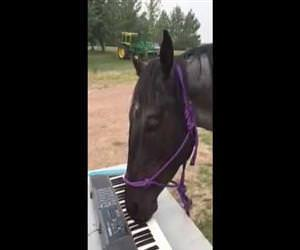 horse playing the piano Funny Video