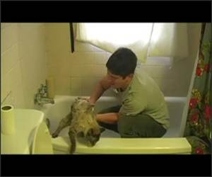 How to give cats Baths Video