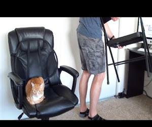 how to survive working with cats Funny Video