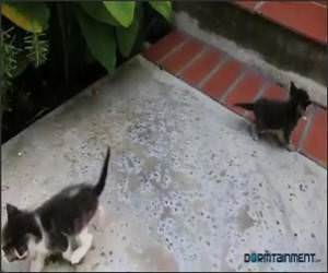 If Kittens Could Talk Video