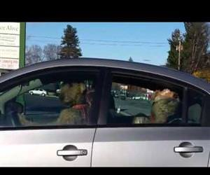 impatient dog honking the horn Funny Video