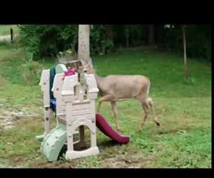 in the deer 2nite Funny Video